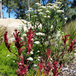 Native Garden in Flower