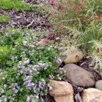 Native Groundcovers and River Rock